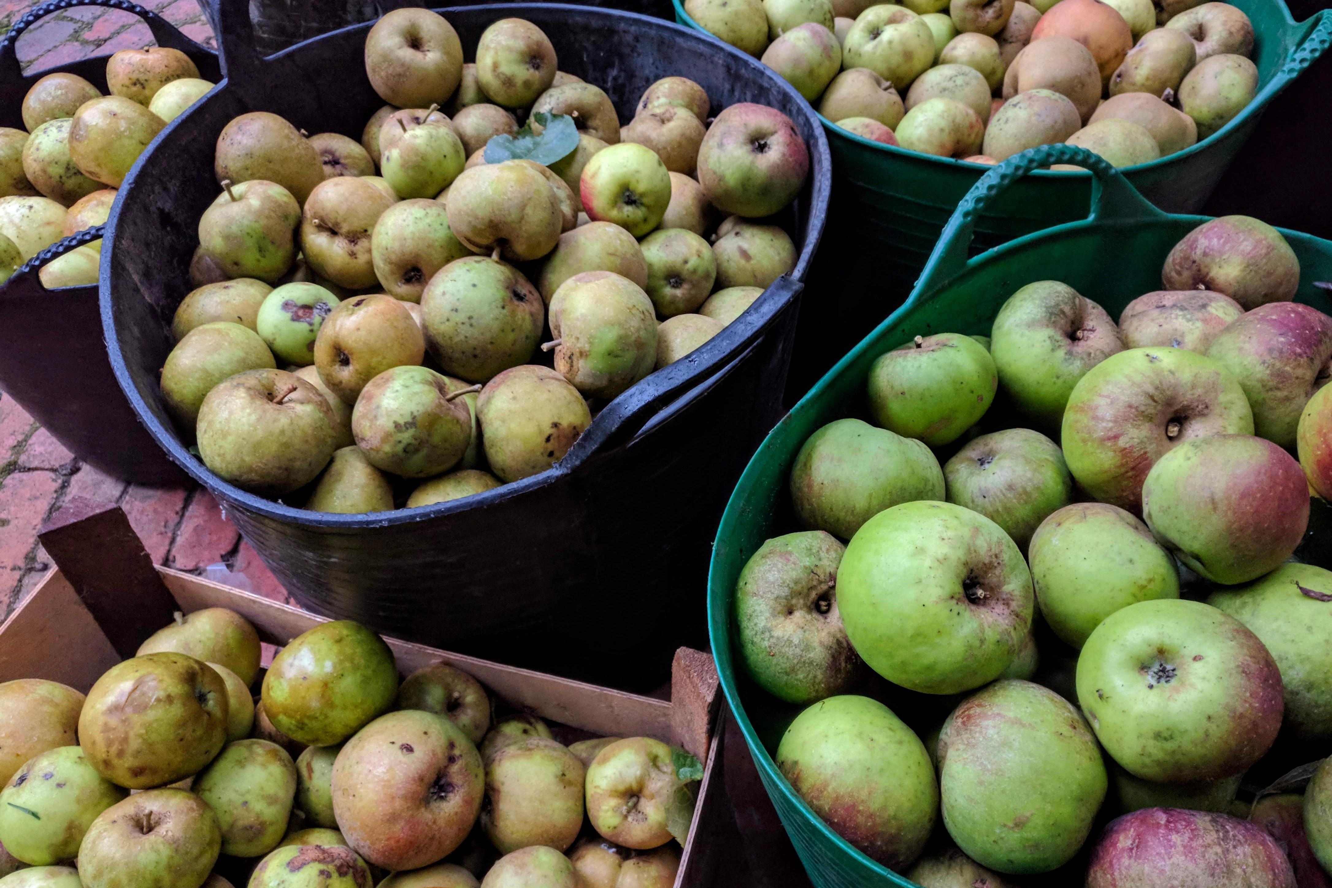 Appels van de Ekelaars